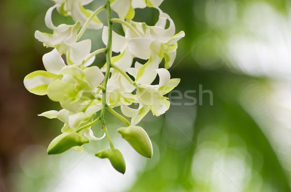 蘭 美しい 緑 花 春 自然 ストックフォト © Pakhnyushchyy