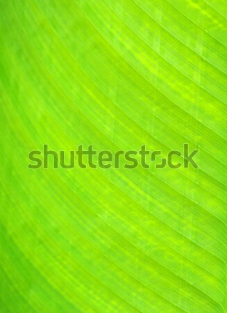 green leaf Stock photo © Pakhnyushchyy