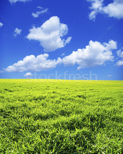 Panorama campo cielo blu primavera erba natura Foto d'archivio © Pakhnyushchyy