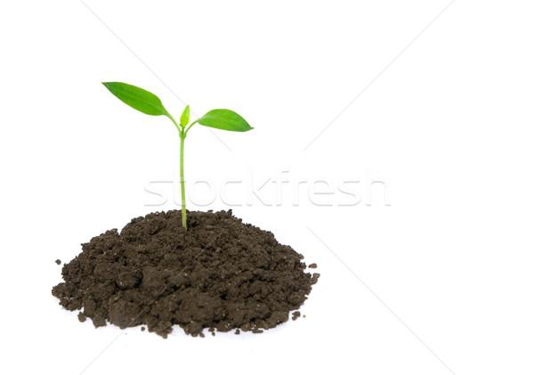 little plant Stock photo © Pakhnyushchyy