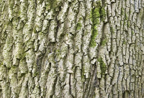Zdjęcia stock: Drzewo · tekstury · starych · wiosną · drewna · lasu