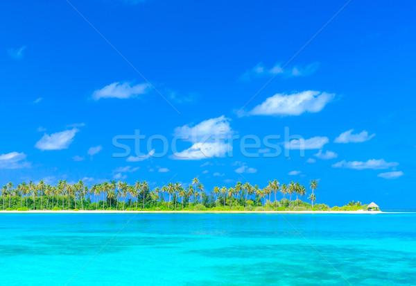 Сток-фото: тропический · пляж · пальмами · синий · пляж · природы