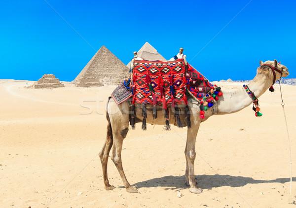 ピラミッド 美しい 空 ギザ ピラミッド 紫色 ストックフォト © Pakhnyushchyy