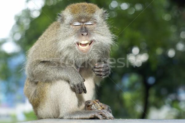 幸せ 笑い 猿 フルーツ ストックフォト © palangsi