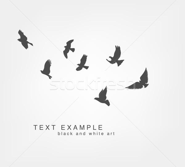 ストックフォト: 暗い · 飛行 · 鳥 · 白 · 自然 · 黒