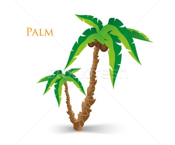 Palmboom boom achtergrond zomer bladeren tropische Stockfoto © Panaceadoll