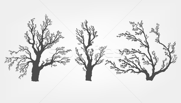 hazel tree on a white background with leaves and root system Stock photo © Panaceadoll