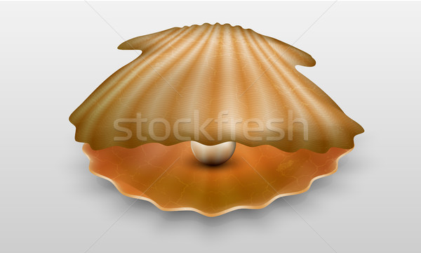Vector pearl in shell Stock photo © Panaceadoll