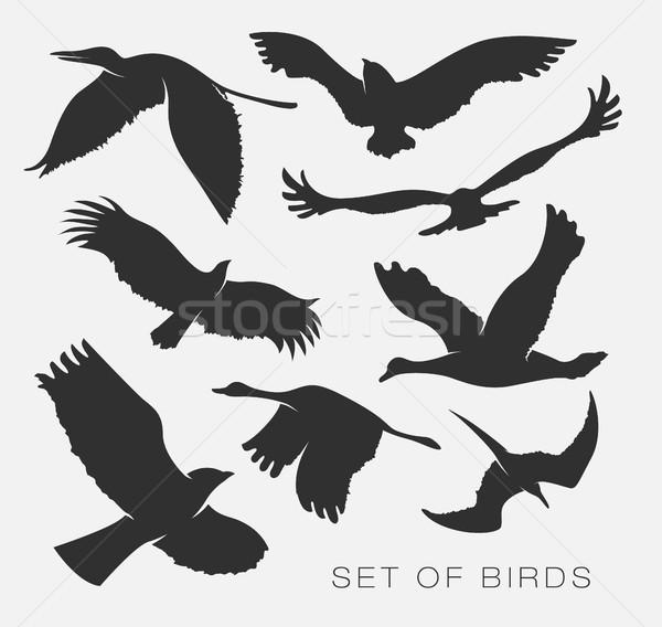 Set sagome uccelli illustrazione albero natura Foto d'archivio © Panaceadoll
