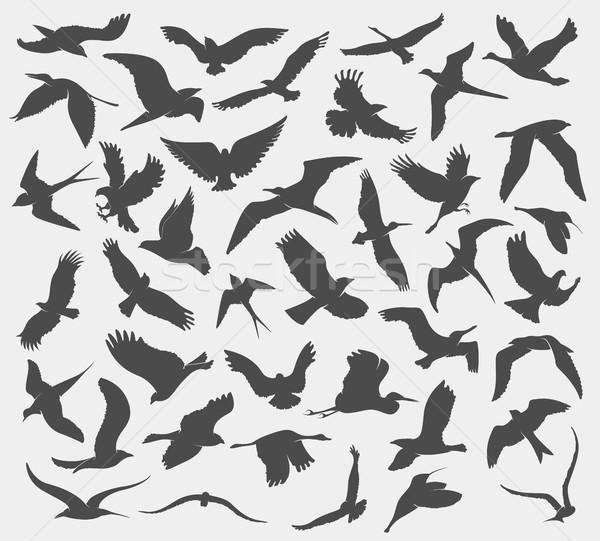 set of silhouettes of birds Stock photo © Panaceadoll
