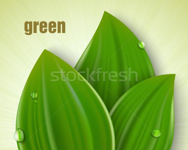 Gondoskodó környezet karok ki fű zöld Stock fotó © Panaceadoll