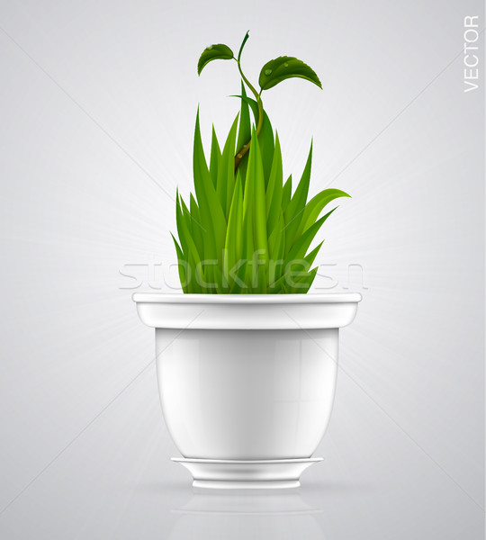 Branco vaso grama verde flor primavera grama Foto stock © Panaceadoll