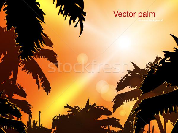 Sonnenuntergänge Savanne Palmen Himmel Baum Sommer Stock foto © Panaceadoll