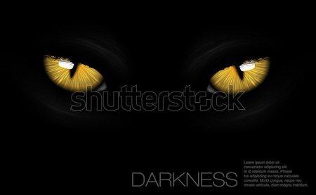 Macska szemek sötétség tűz sport terv Stock fotó © Panaceadoll