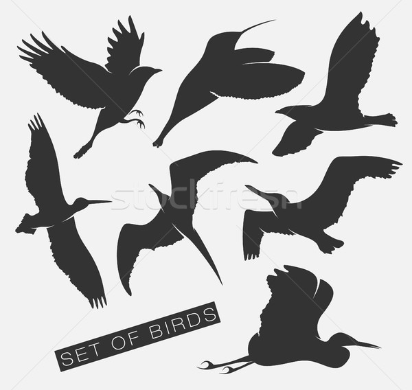 set of silhouettes of birds Stock photo © Panaceadoll