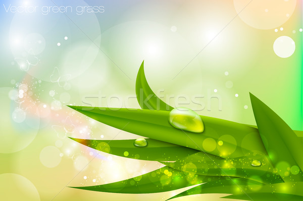 Folhas verdes grama flor primavera folha beleza Foto stock © Panaceadoll