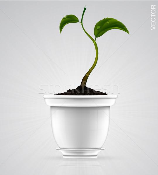 white flowerpot with green grass Stock photo © Panaceadoll