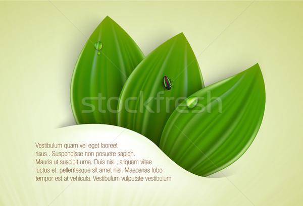 Zöld fű levelek nyár tavasz természet fény Stock fotó © Panaceadoll