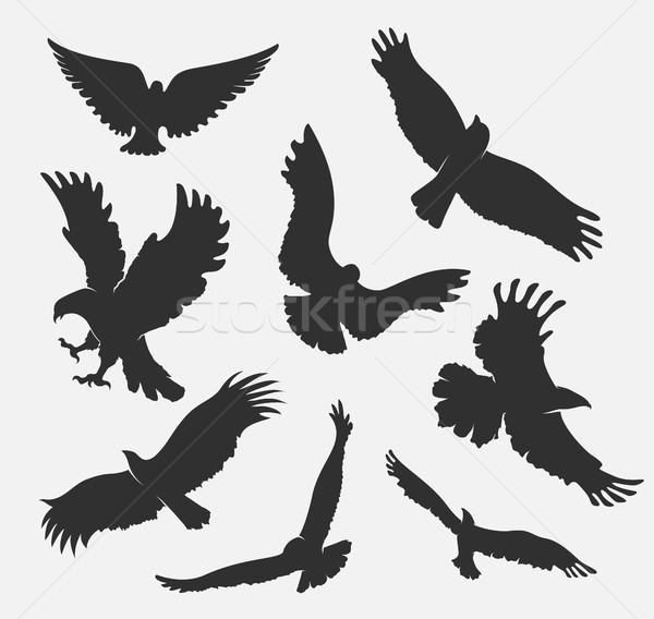 silhouette flying eagle on white background Stock photo © Panaceadoll