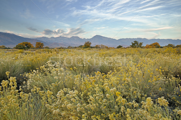 Fall Owens Valley Morning Stock photo © pancaketom