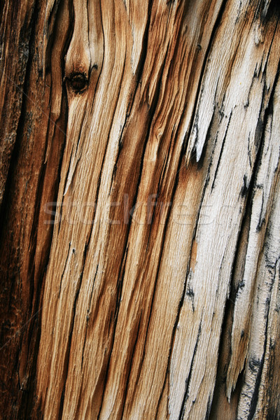 splintered gray wood Stock photo © pancaketom