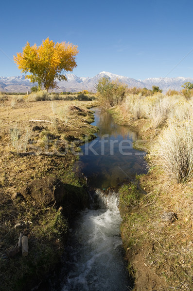 Fall Irrigation Ditch Stock photo © pancaketom
