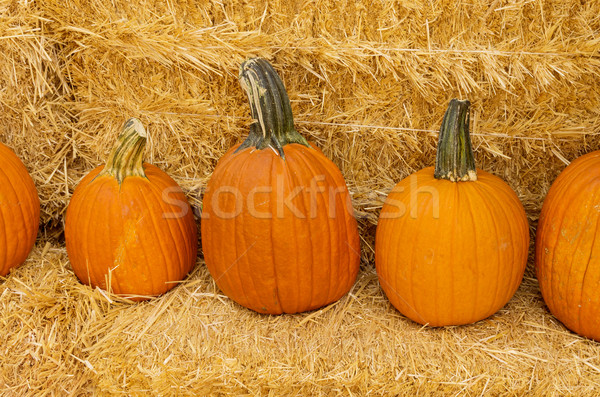 Row Of Pumpkins On Hay Stock photo © pancaketom