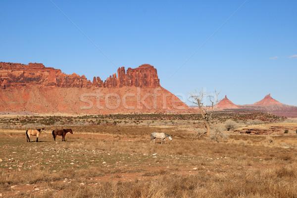 Güneybatı atlar kırmızı kaya Stok fotoğraf © pancaketom