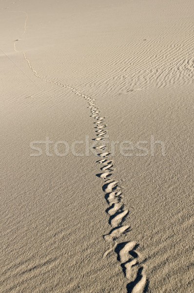 Snake Tracks Stock photo © pancaketom