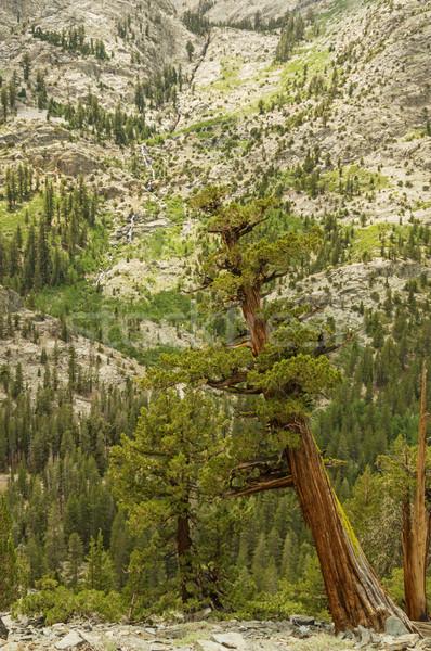 западной деревья юг вилка реке каньон Сток-фото © pancaketom