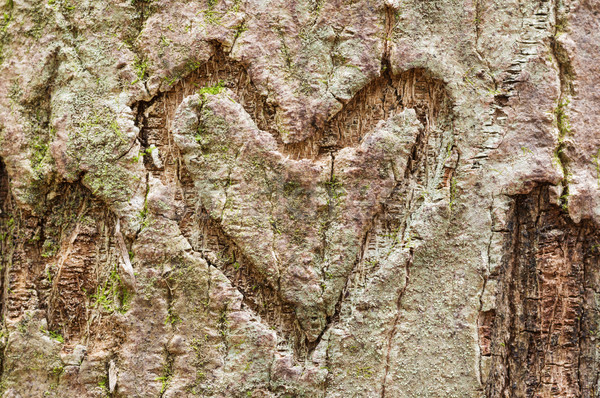 Ugatás szív szív alak fa moha Stock fotó © pancaketom