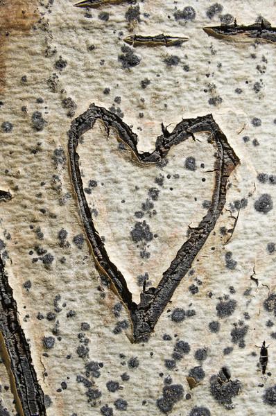 öreg ugatás szív fatörzs fa Stock fotó © pancaketom