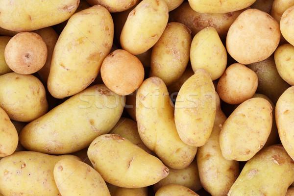 potato background Stock photo © pancaketom