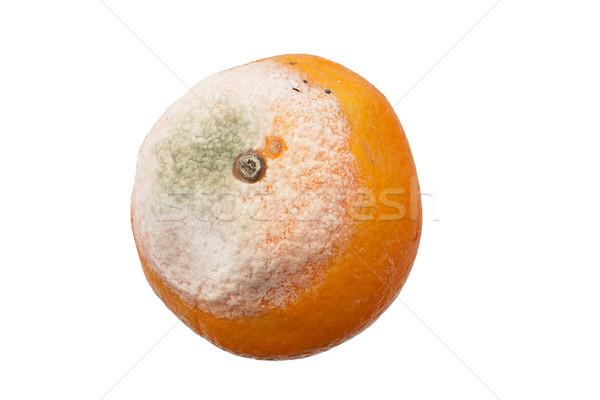 Moldy Orange Stock photo © pancaketom