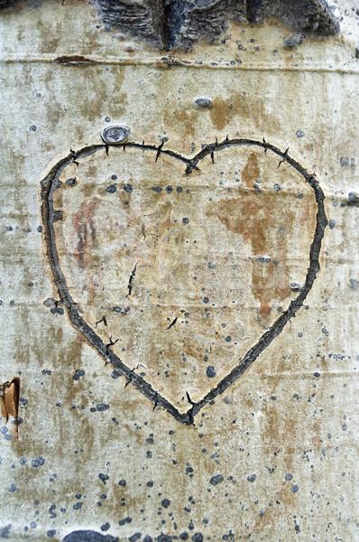 Schors hart boom Stockfoto © pancaketom