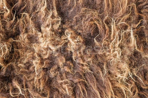 Bison Fur Stock photo © pancaketom