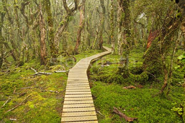 Új-Zéland dél sziget nyom felfelé Stock fotó © pancaketom