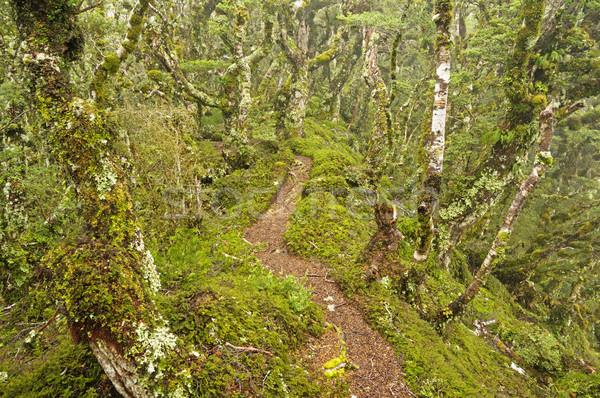 Forest Path Stock photo © pancaketom