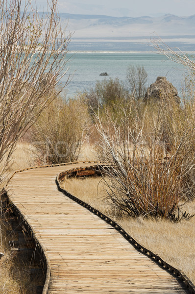 Boardwalk Trail Stock photo © pancaketom