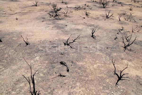 Deserto sezione vuota asciugare Foto d'archivio © pancaketom