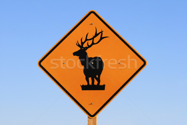 elk road sign Stock photo © pancaketom