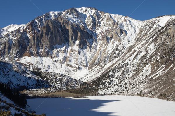 лавры горные зима заморожены Сток-фото © pancaketom