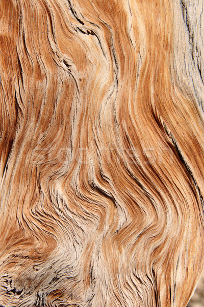 Grain de bois texture bois nature fond grain Photo stock © pancaketom