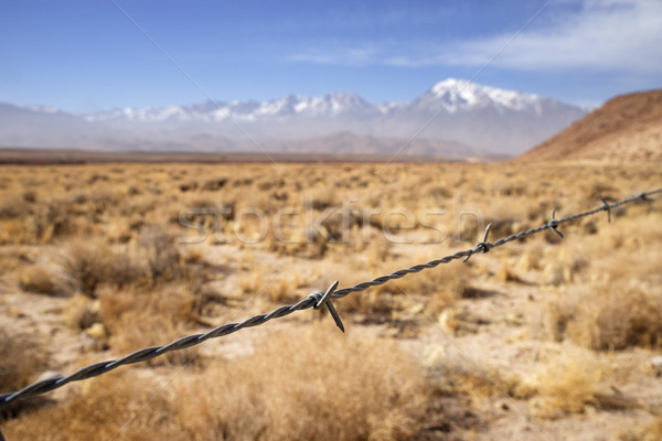 Barbed Wire Fence Strand Stock photo © pancaketom