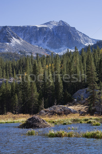 Mountain Beaver Lodge Stock photo © pancaketom