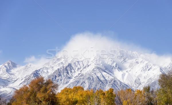 Frescos nieve nubes paisaje árboles montana Foto stock © pancaketom