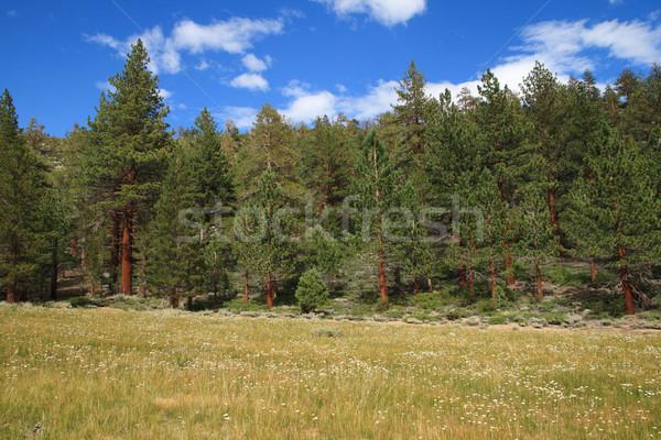 Sierra Meadow Stock photo © pancaketom