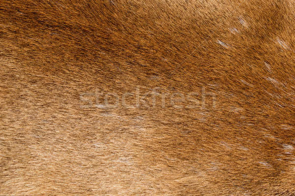 Mountain Lion Fur Background Stock photo © pancaketom