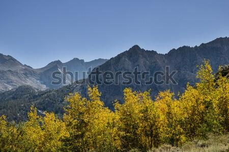 Fall Aspen Color Stock photo © pancaketom