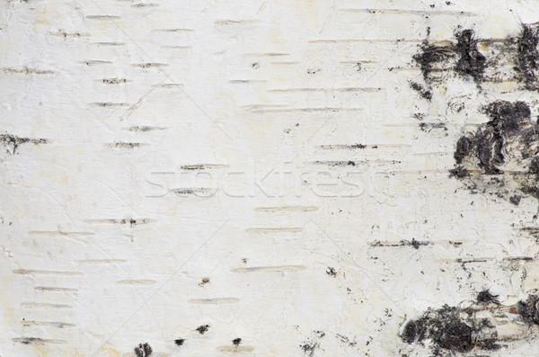 Huş ağacı havlama beyaz orospu makro doku Stok fotoğraf © pancaketom